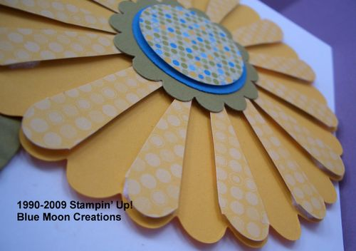 Scallop circle sunflower 003