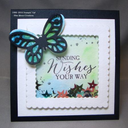 Butterfly Basics 040