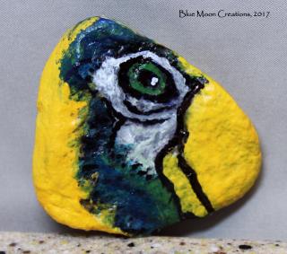 Parrot rock 1
