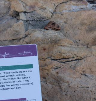 Dinosaur rock skyline drive 1