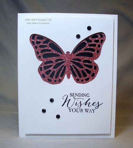Butterfly Basics 033