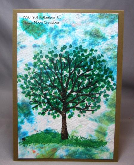 Sheltering Tree 103